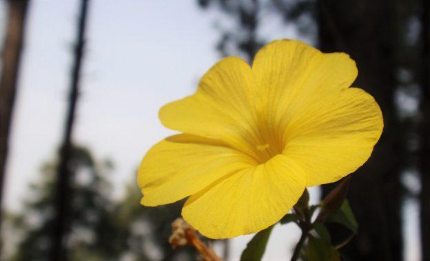 Yoga Blomst Triyoga, Sundhed